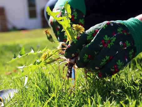 Things to Remember to Manage Your Lawn Weeds Better