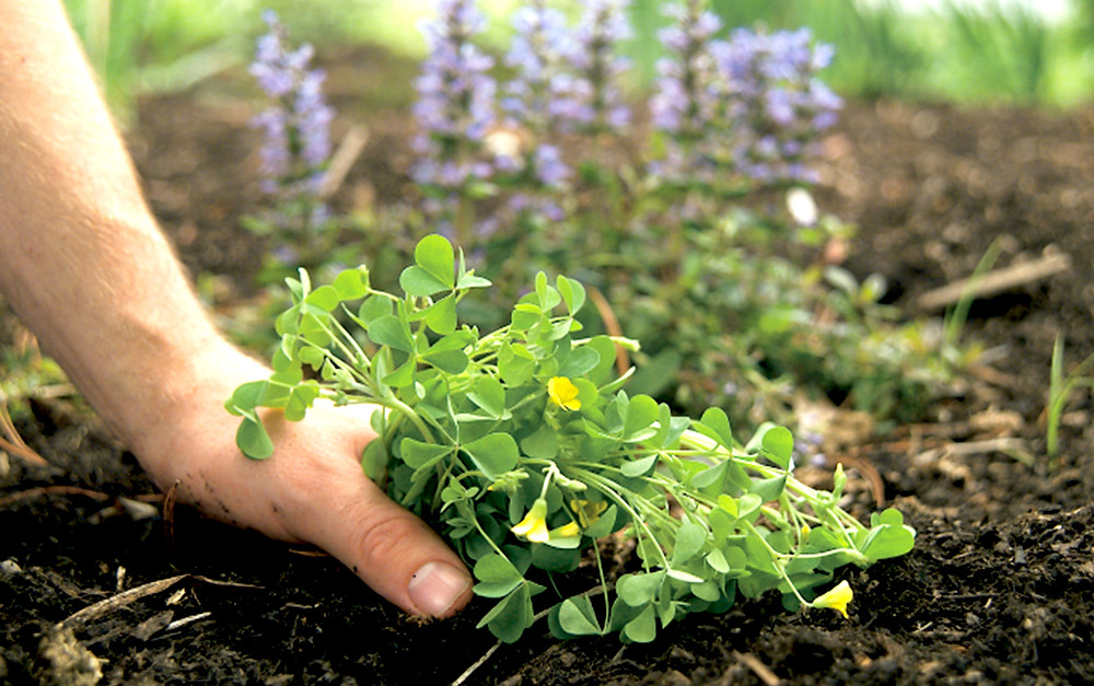 Weed and How to Eliminate Them Off Your Lawn Calgary
