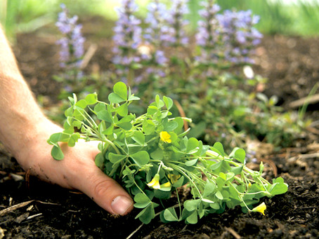 Common Types of Weed and How to Eliminate Them Off Your Lawn