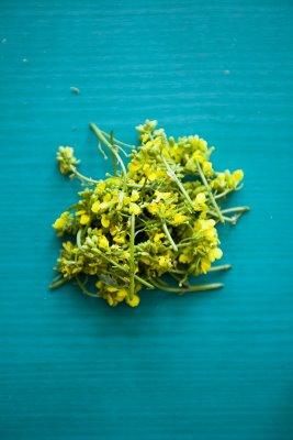 fleurs de moutarde