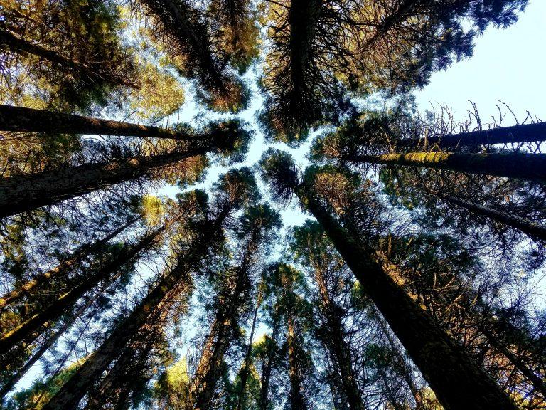 Oregon-4h-center-fir-trees-768x576