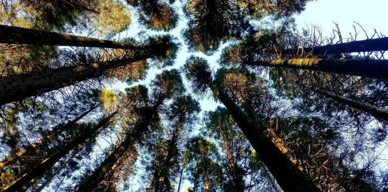 Oregon-4h-center-fir-trees-768x576.jpg