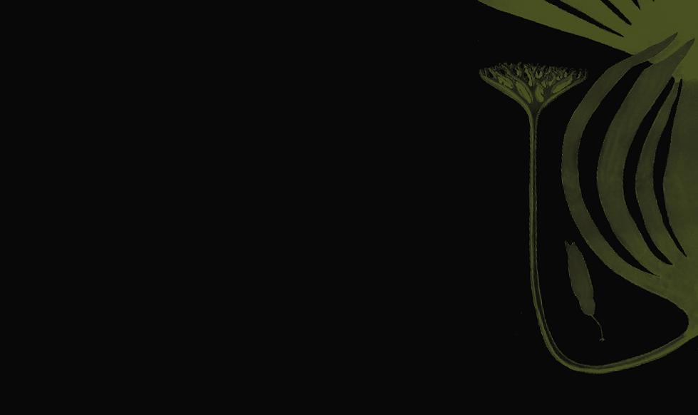 Kelp Black.png