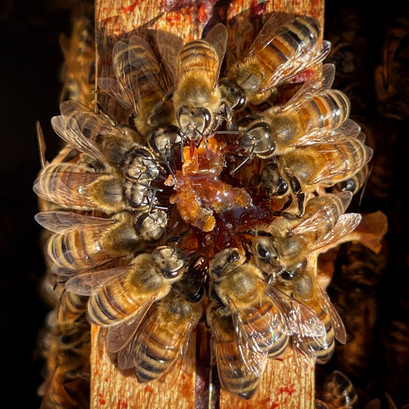 abeilles-en-rond.jpg