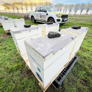 miel de nos ruches des Yvelines