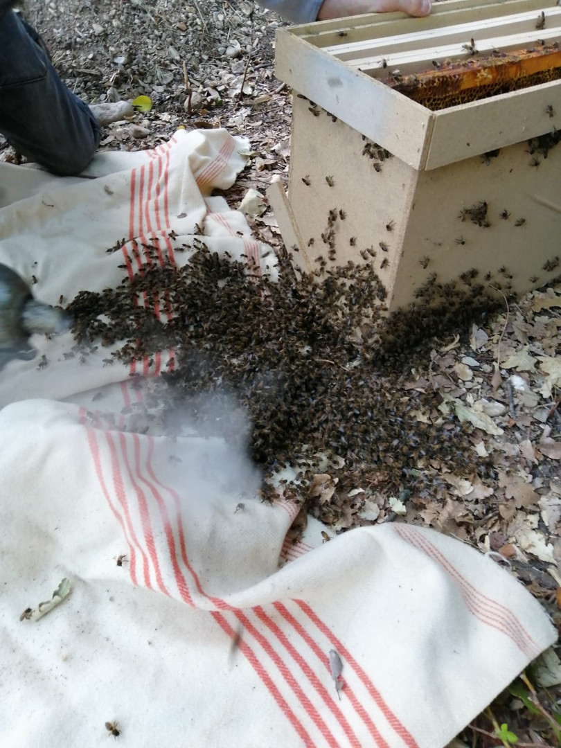 abeilles_recuperation_dgf26.jpg