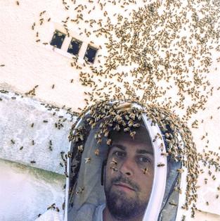 extraction vide sanitaire abeilles