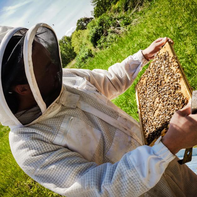 apiculteur-yvelines.jpg