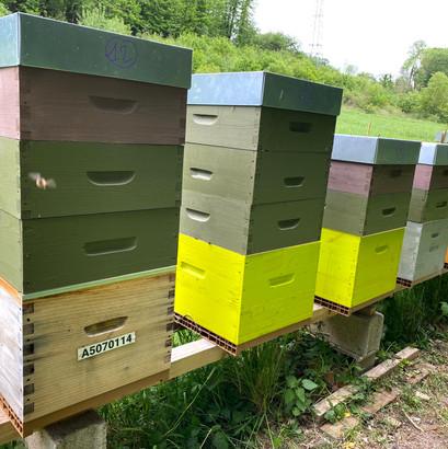 hausses-de-miel-sur-ruche.jpg