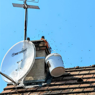 enlèvement colonie abeilles