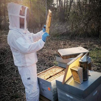 visite-des-ruches.jpg