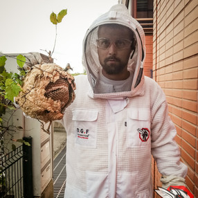 Destruction de frelons maurepas