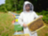 apiculteur miel nid abeilles 78 Yvelines