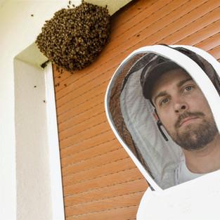 essaim d'abeilles dans volets roulants