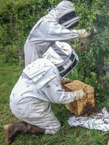abeilles-elodie-essaim.JPG