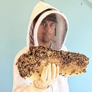 extraction abeille plafond