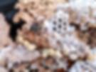 experts pour détruire nid frelons asiaqtiues 78 Yvelines Versailles