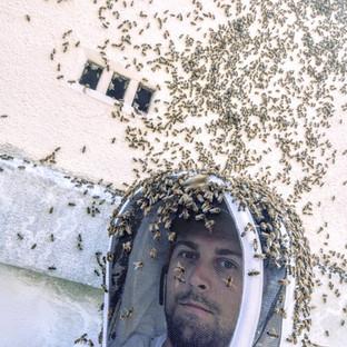 récupération d'abeilles dans un vide sanitaire trappes