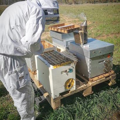 travail-au-rucher.jpg