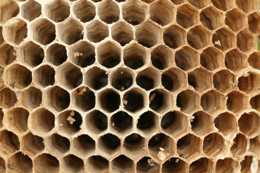 hornet-nest.jpg