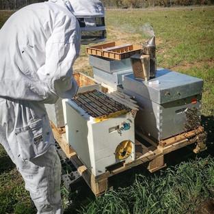 Visite de nos ruches.jpg