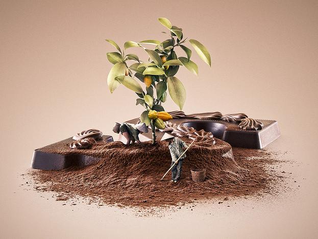 Fair Trade - Cacao