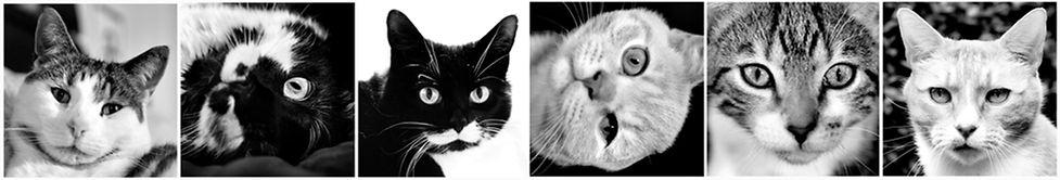 cats banner bw.jpg