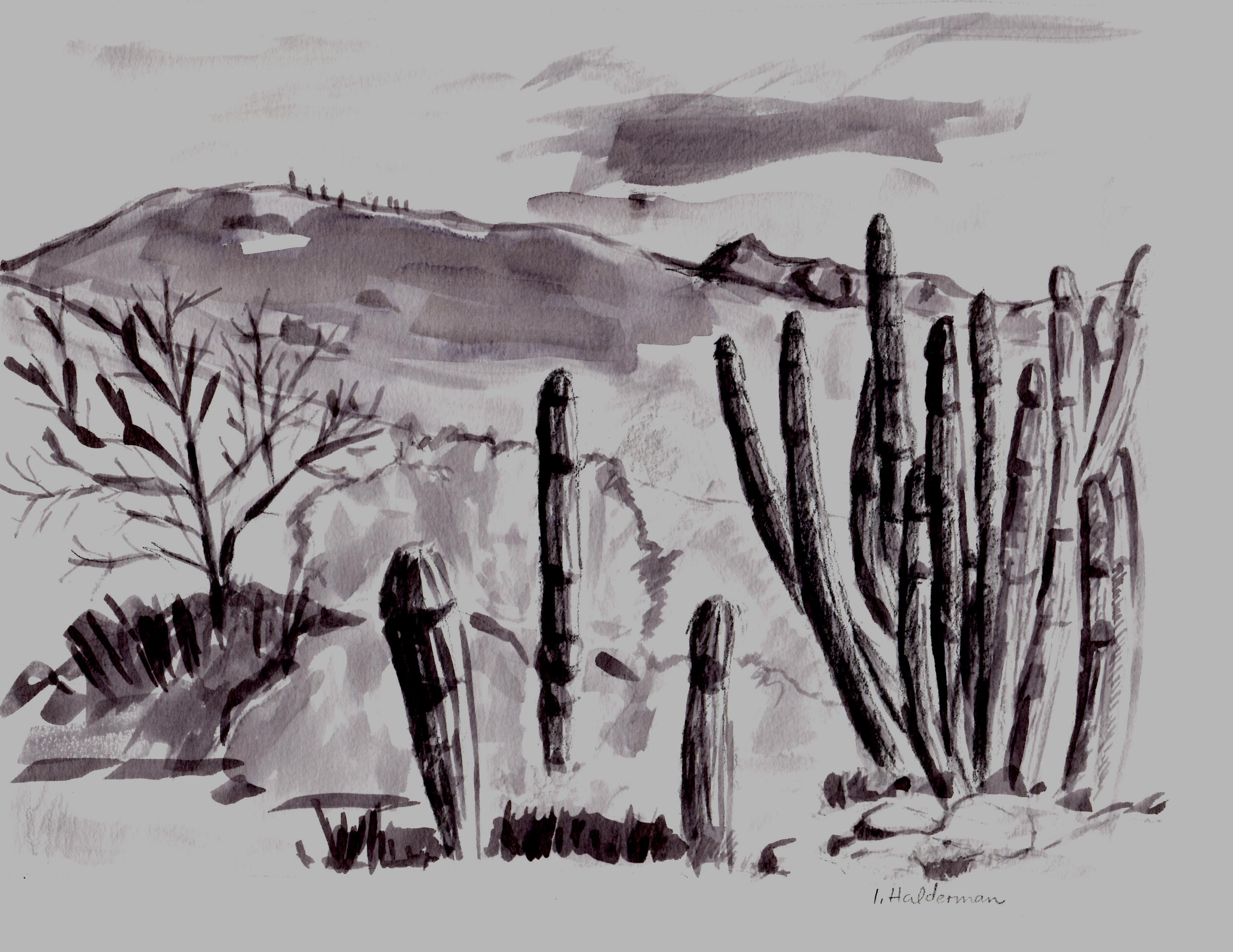 AZ Desert Museum