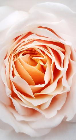 flower 3f.jpg