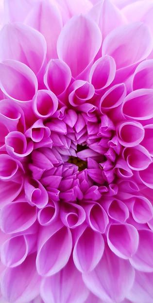 flower 1 F.jpg