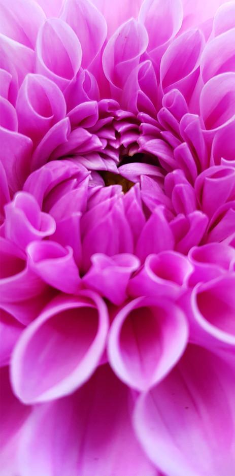 flower 2f.jpg