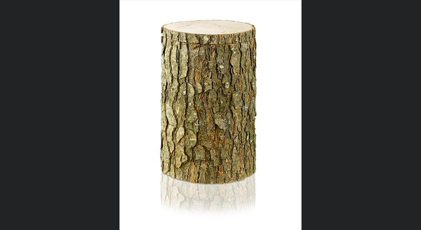 Erlenbaumstamm
