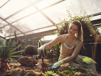 O jardim interno