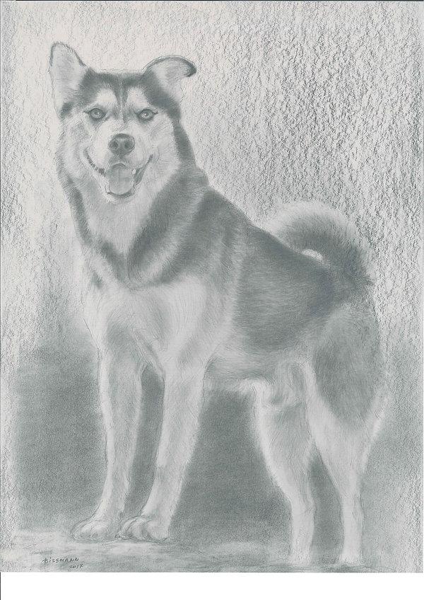 Caribou Zeichnung.jpg