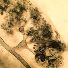 Fungi and Joshua trees