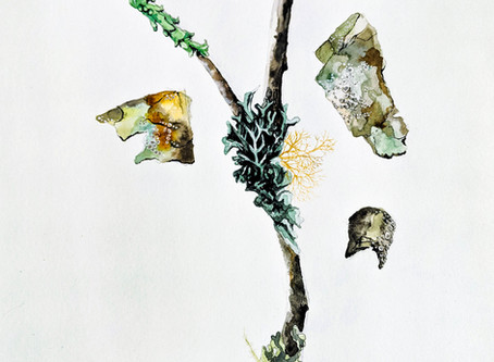 Juniper's lichen illustrations featured at upcoming Santa Cruz art show, Nov 6th-Dec 8th!
