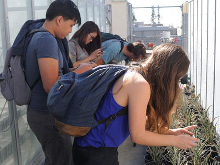 Seeking Symbiosis - bringing art-science to the classroom!