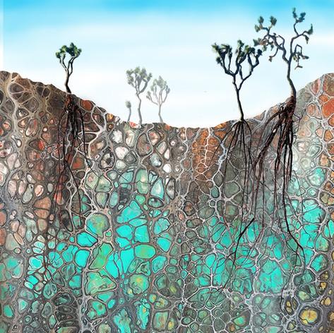Soil Symbiosis