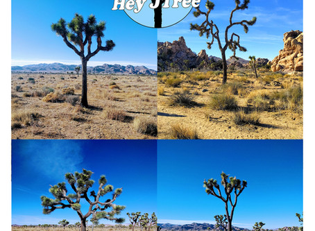 Online dating with Joshua trees! Review by Atlas Obscura