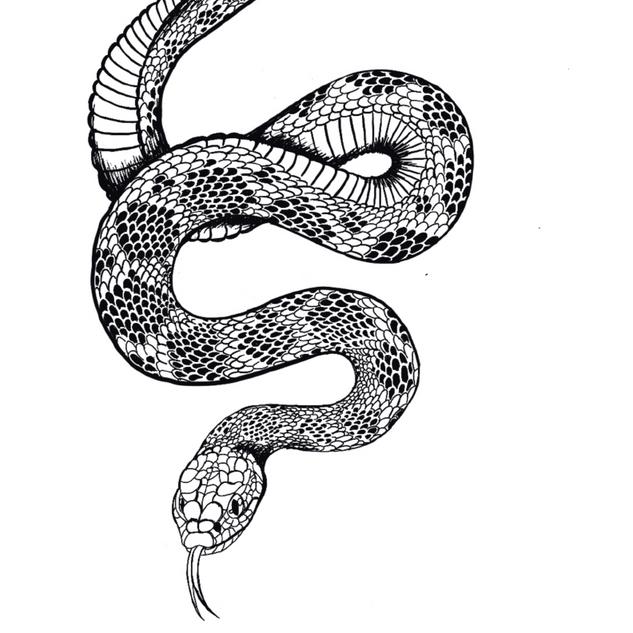 Red diamond rattlesnake - Crotalus ruber
