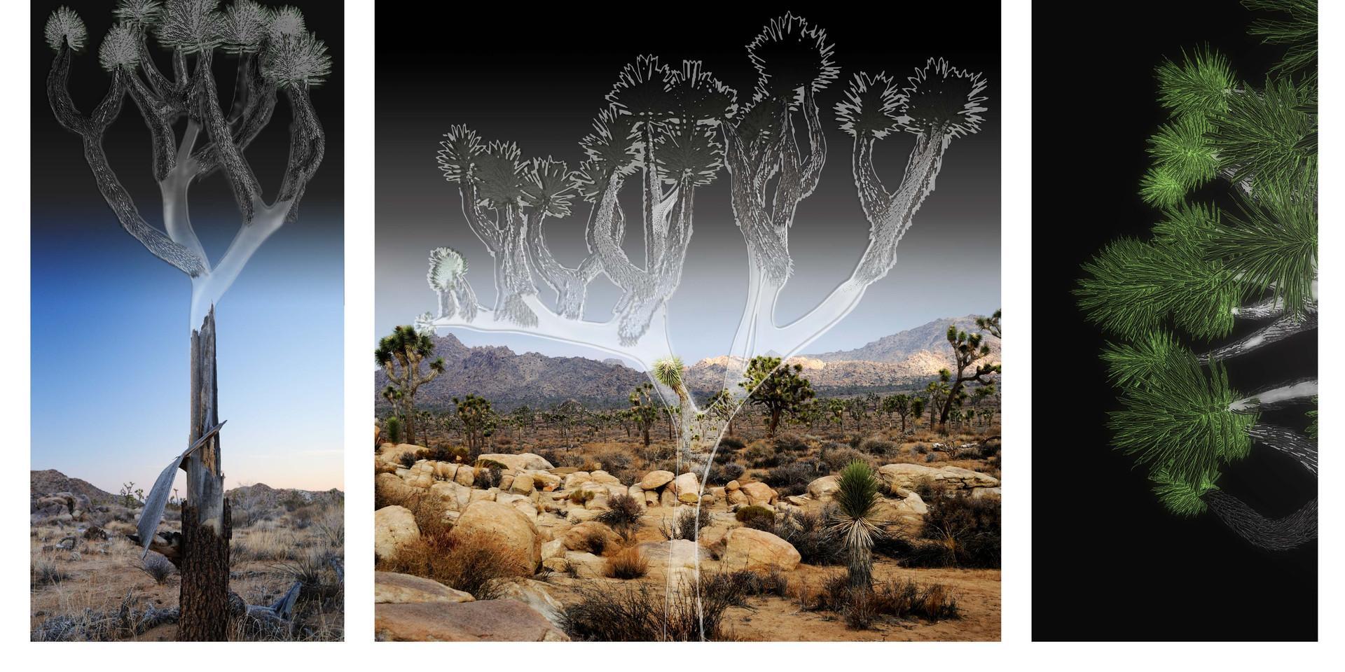 Joshua tree ghosts