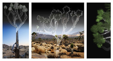 joshua-tree-ghosts.jpg