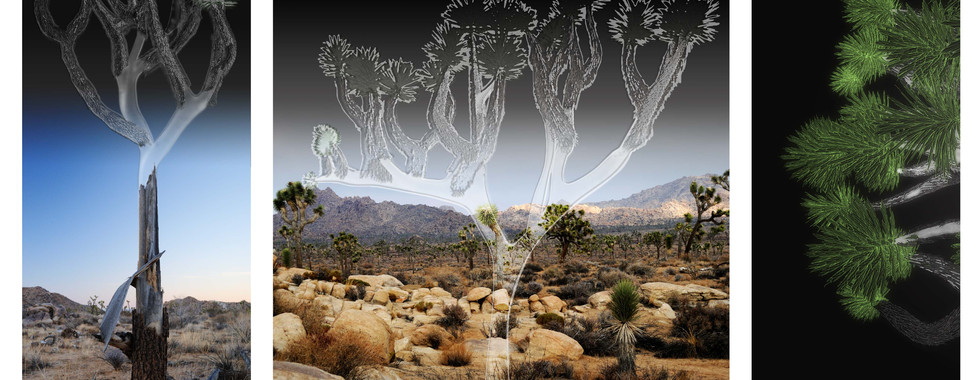 Joshua tree ghosts