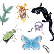Endangered species illustrations
