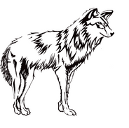 Mexican wolf - Canis lupus baileyi
