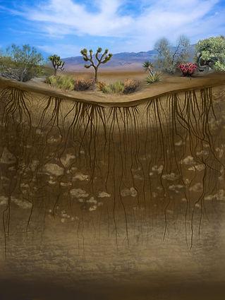 upside down desert.jpg