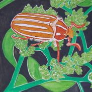 Mt. Hermon June Beetle