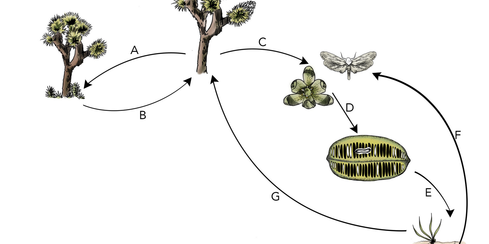 Jtree reproduction