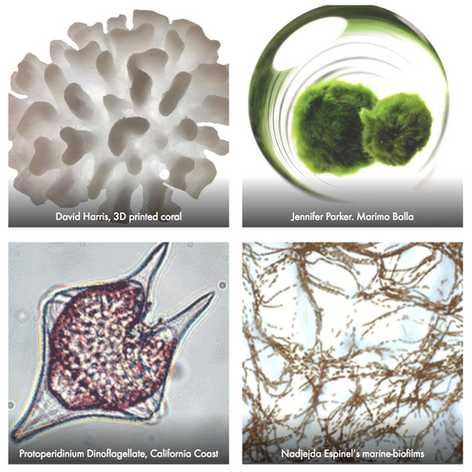 Algae Society BioArt Design Lab