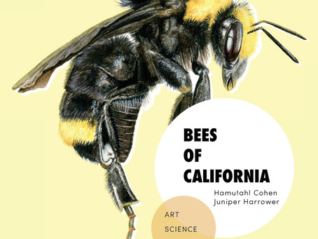 We published a new Art/Science/Poetry book on CA bees!